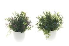 Viherkasvi kukkiva - Tekokukat - 143882 - 1